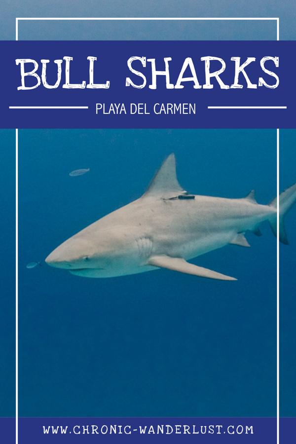 Bull Sharks Pinterest