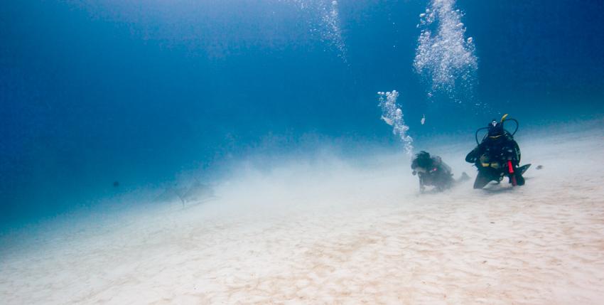 Bullenhaie Playa del Carmen Tauchen