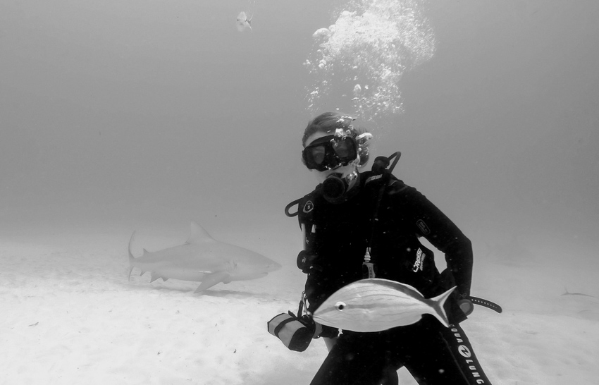 diving bull sharks Bullenhaie Playa del Carmen Tauchen