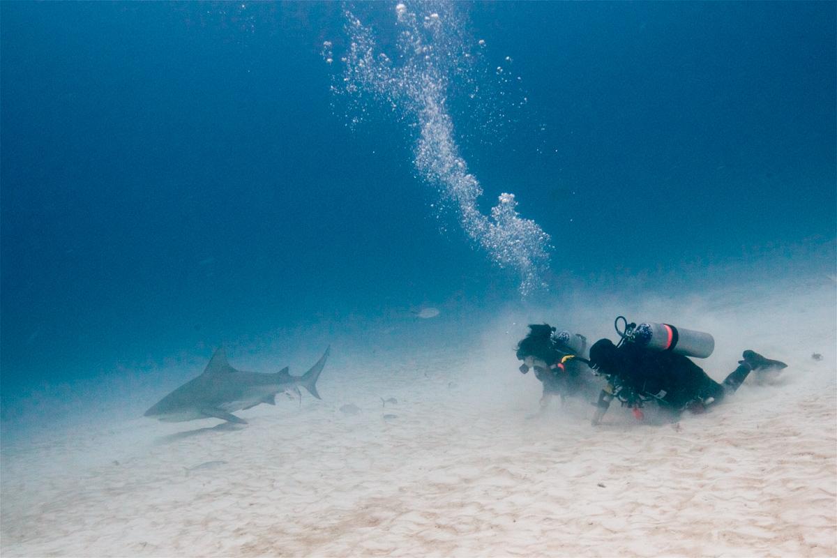 Diving With Bull Sharks In Playa Del Carmen Chronic Wanderlust