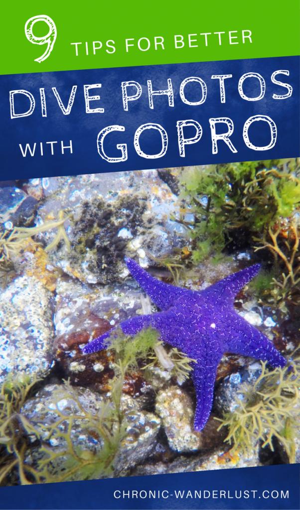 better underwater photos gopro diving pinterest