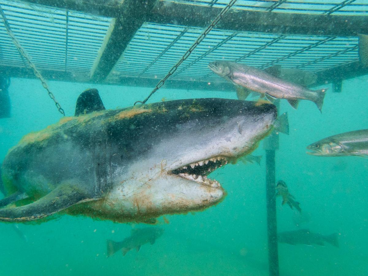 Grüblsee Alpenaquarium Tauchen Hai