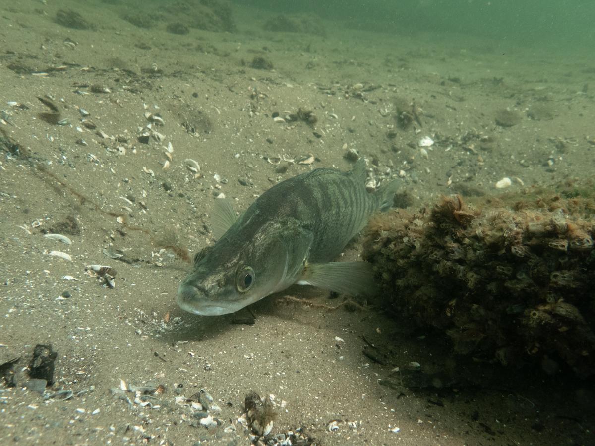 Scuba Diving in Carinthia Ossiacher See
