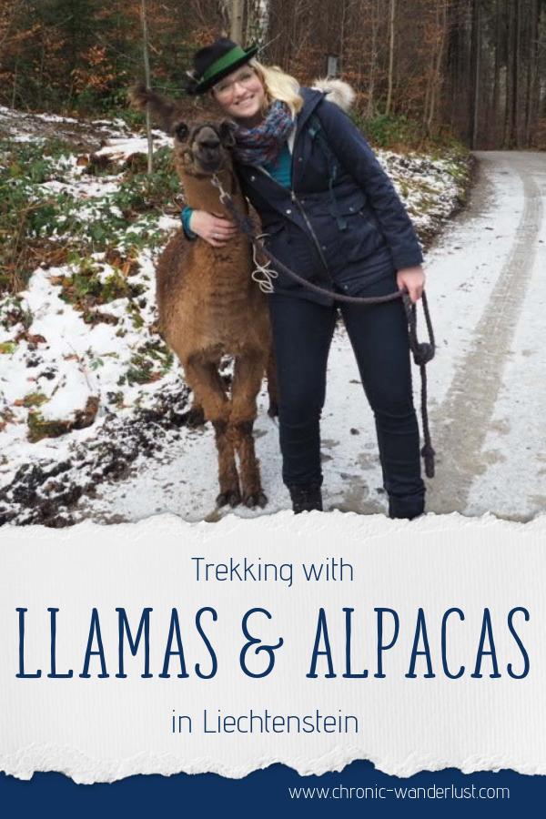 Trekking Llamas Alpacas Liechtenstein Winter