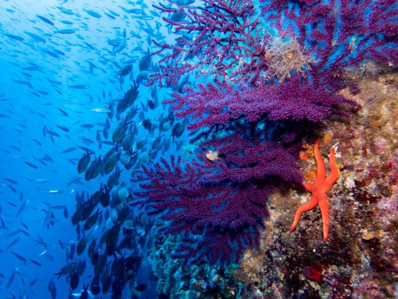 Murter Diving Croatia